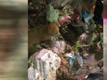 Perro rescatado en un vertedero