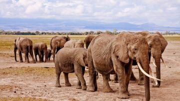 Imagen de un grupo de elefantes en Botsuana