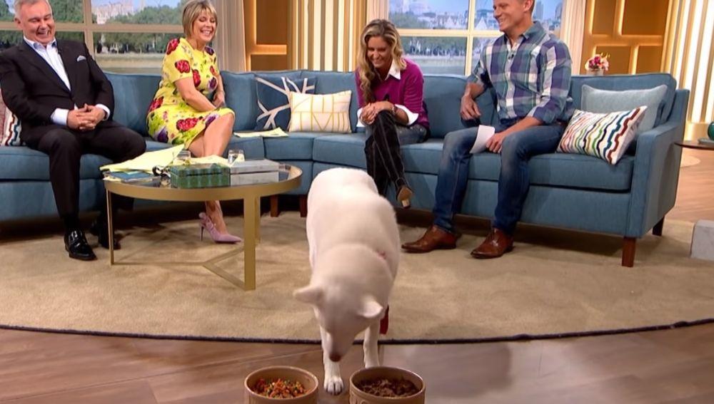 Perro vegano en televisión