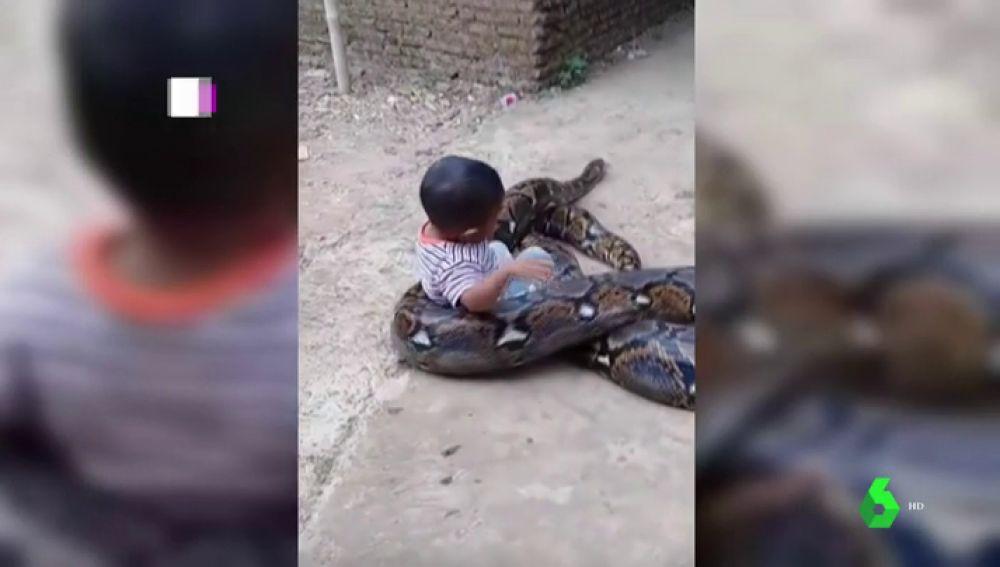 Un niño juega con una pitón en Indonesia
