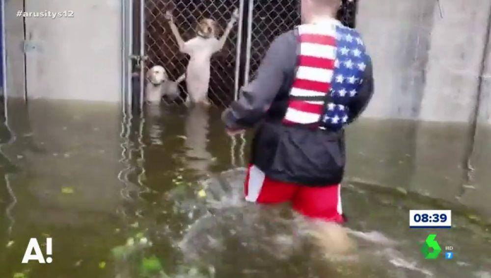 Momento en el que un hombre rescata a un grupo de perros enjaulados