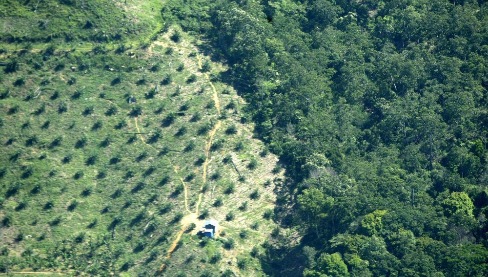 Vista aérea de una plantación de aceite de palma en Indonesia