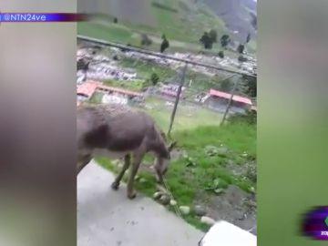Este es el surrealista vídeo de Nicolás Maduro, el burro por el que dos bomberos irán a la cárcel