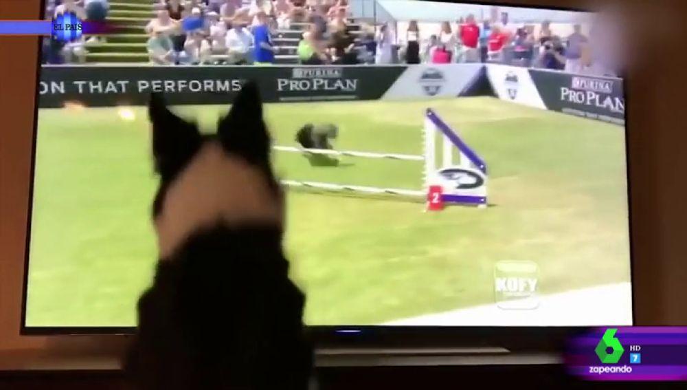El divertido vídeo de un perro