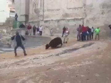 Imagen de la vaquilla que grita de dolor en las fiestas de San Mateo de Cuenca
