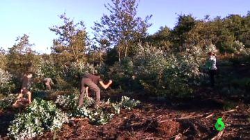 Voluntarios que eliminan eucaliptos y plantan especies autóctonas en A Coruña