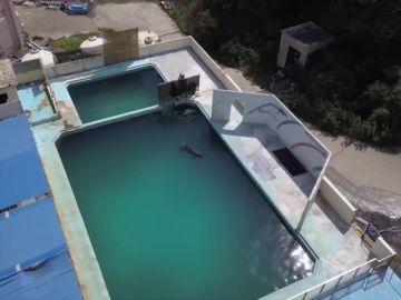 Las indignantes imágenes de un delfín abandonado en un acuario cerrado en Japón