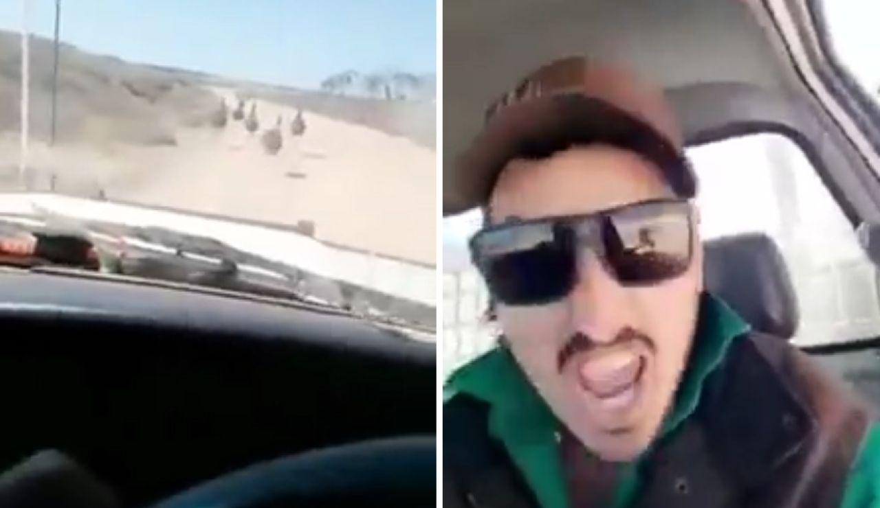 Vídeo atropellando animales
