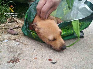 Imagen del perro encontrado moribundo en un contenedor de Palma de Mallorca