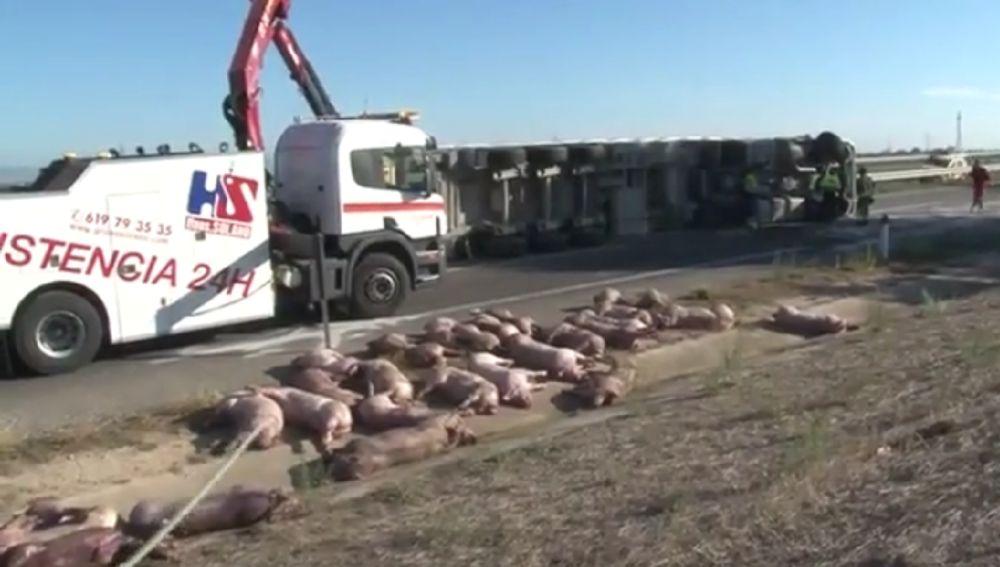 Más de una treintena de animales han muerto en un accidente al volcar un camión en la A-2