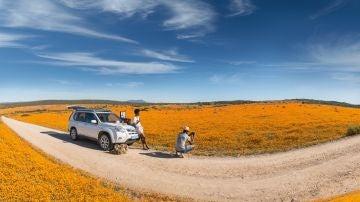 Sudáfrica: flores en el desierto