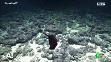 Logran grabar en acción a un pez pelícano a más de 1.000 metros de profundidad