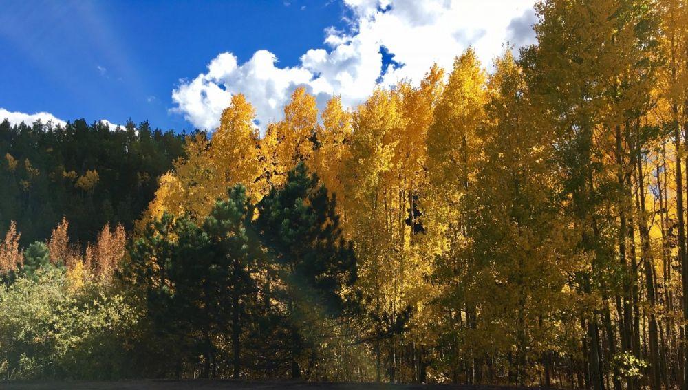 Imagen de archivo de árboles en otoño