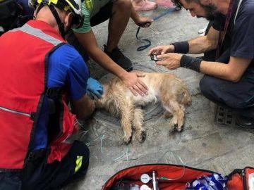 Imagen de los Bomberos de Sevilla reanimando a un perro