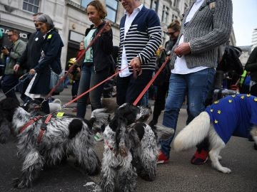 Manifestación contra el Brexit con centenares de personas y sus perros