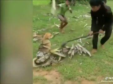 El impactante vídeo que muestra el rescate de tres niños a un perro que iba a morir asfixiado por una serpiente
