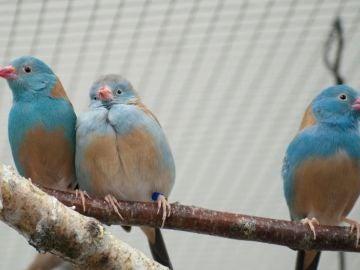 Estas parejas de aves desatan su pasion ante los demas