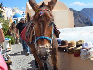 Burro en Santorini