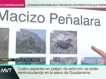 La Sierra de Guadarrama acoge a cuatro especies protegidas: ¿Cómo afecta la meteorología a estos animales?
