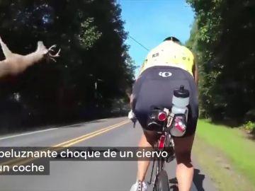 Unos ciclistas graban el brutal choque de un ciervo con un coche en plena carretera