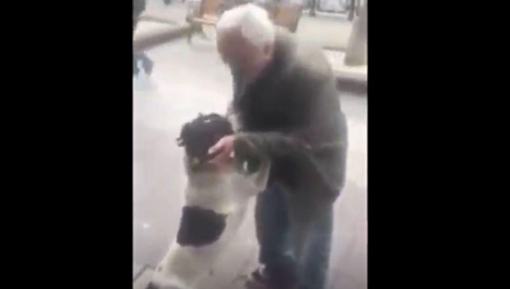 El emotivo reencuentro de un perro con su dueño tras pasar tres años perdido