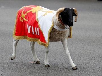 Imagen de 'Palito', la cabra de la Legión