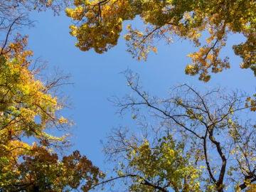 Imagen de un árbol en otoño (Archivo)