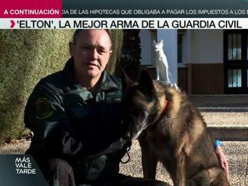 Ha participado en la búsqueda de Diana Quer, Marta del Castillo o Gabriel Cruz: así es Elton, el mejor perro de la Guardia Civil