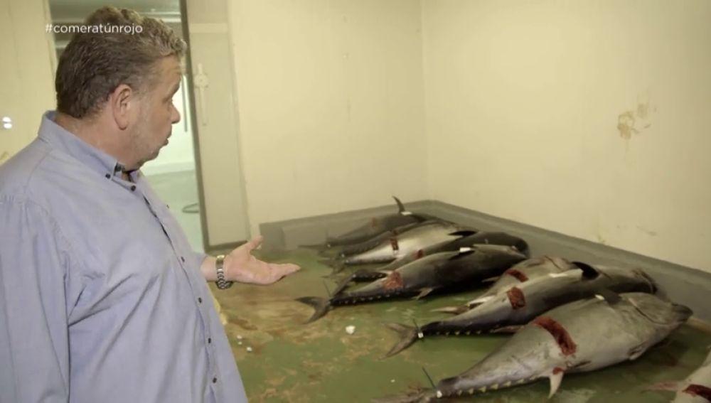 """""""La higiene es de vergüenza"""": Alberto Chicote se cuela en la nave ilegal de uno de los principales distribuidores de atún rojo del país"""