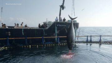 Alberto Chicote pone al descubierto el fraude del atún rojo en ¿Te lo vas a comer?