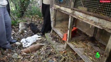 Imagen de conejos asesinados por un hombre que está en búsqueda y captura