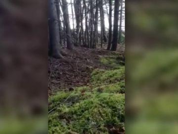 Esta es la explicación científica al peculiar fenómeno del bosque que 'respira'