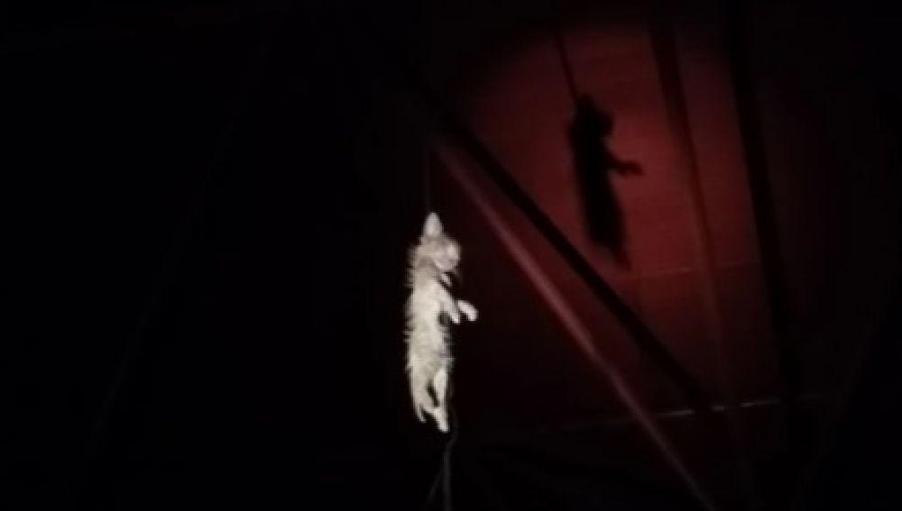 Gatito ahorcado en el madrileño barrio de Vallecas