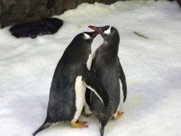 Dos pingüinos gays