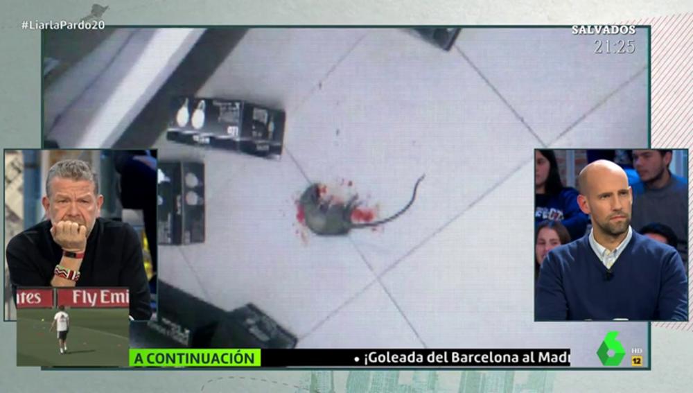 Rata muerta en la residencia de Babilafuente
