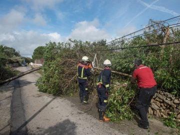 Efectivos del cuerpo de bomberos retiran un árbol caído en la zona de la urbanización La Argentina