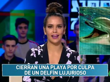 """""""Cierran una playa por culpa de un delfín lujurioso"""": el 'Zapcheck' de Cristina Pedroche pone a prueba a los zapeadores"""