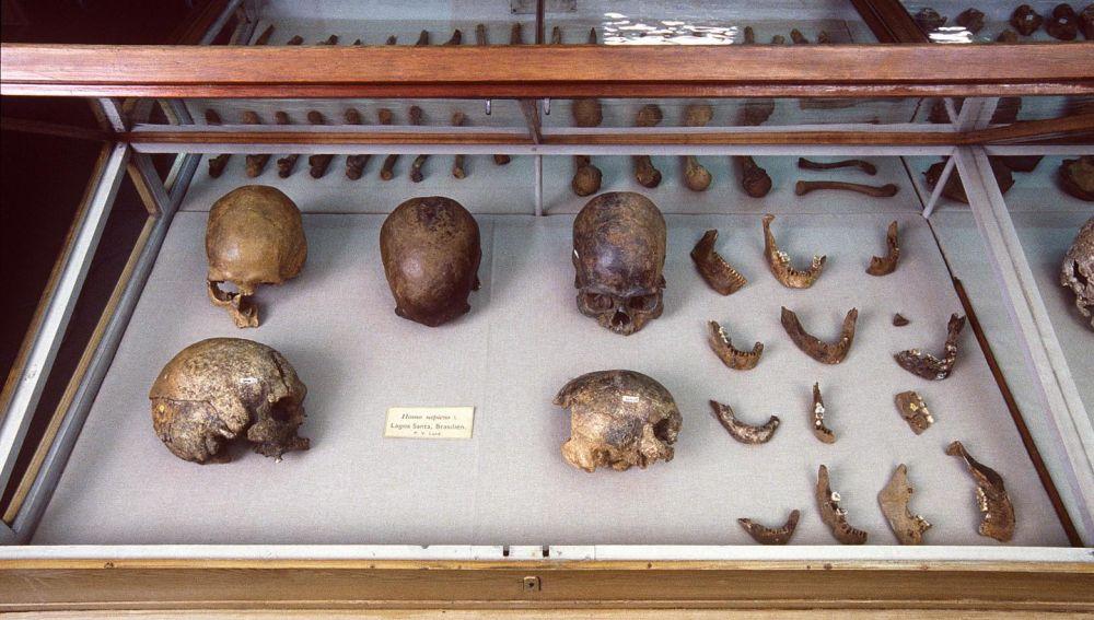 La compleja prehistoria genetica de America