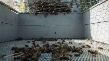 'El silencio de las abejas', este viernes en Equipo de Investigación