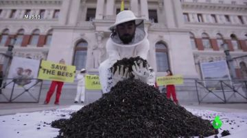 El 'colapso de las colmenas': así afectan los pesticidas de la agricultura a las abejas