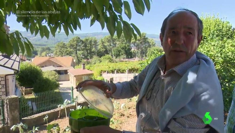 La incesante lucha de O Porriño contra la avispa asiática: invierte más de 7.000 euros en 500 trampas