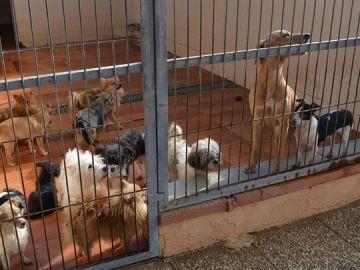 Algunos de los perros que necesitan adopción
