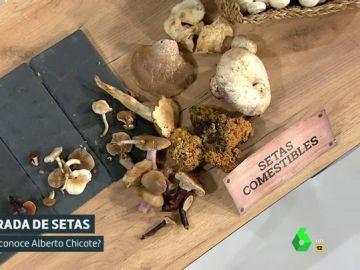 El color, el olor, la forma... ¿Cómo distinguir las setas venenosas de las comestibles?