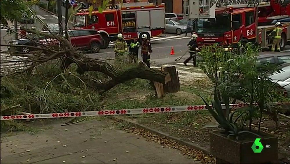 Las fuertes rachas de viento derriban un árbol en Getxo