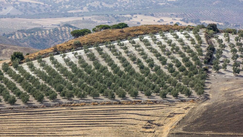 La tierra cultivada en Espana es insuficiente para abastecer el consumo del pais