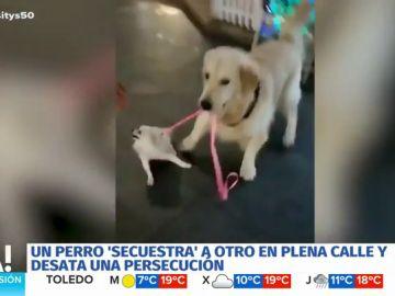 El tierno y surrealista 'secuestro' de un perro a otro más pequeño en plena calle