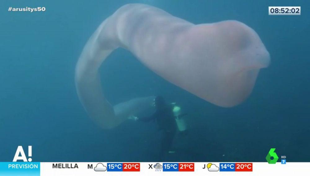 La increíble aparción de un extraño 'gusano de mar' de ocho metros de largo en aguas de Nueva Zelanda