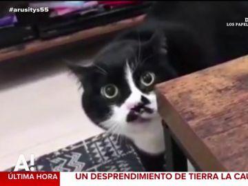 El gato que triunfa en redes sociales cantando gregoriano
