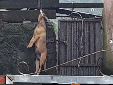 El perro ahorcado hallado en el patio de una vivienda en A Coruña
