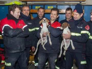 Rescatan a cuatro perros en una tubería de Mutxamel, Alicante